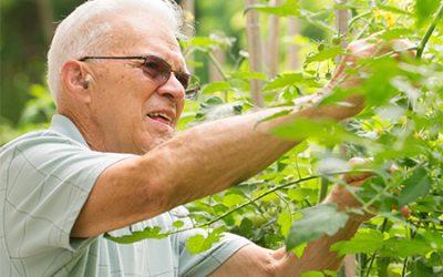 Gardening With Arthritis