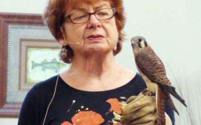 Lifelong Learning: Meet The Raptors!