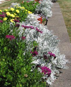 avila flower lined walkways
