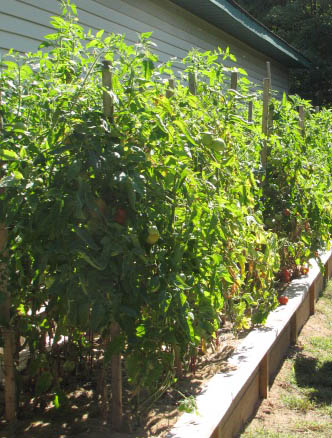 tomato-trees-avila