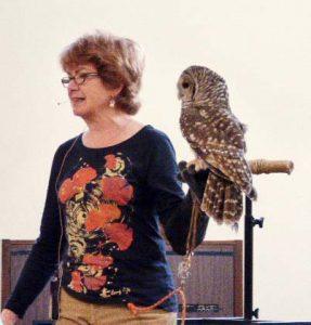 Barred Owl - Avila