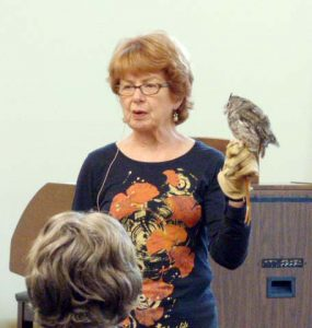 Eastern Screech Owl - Avila