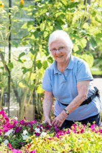 Senior in the garden pulling magenta colored petunias